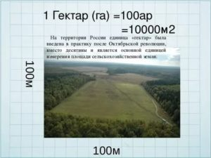 1 гектар это сколько на сколько метров